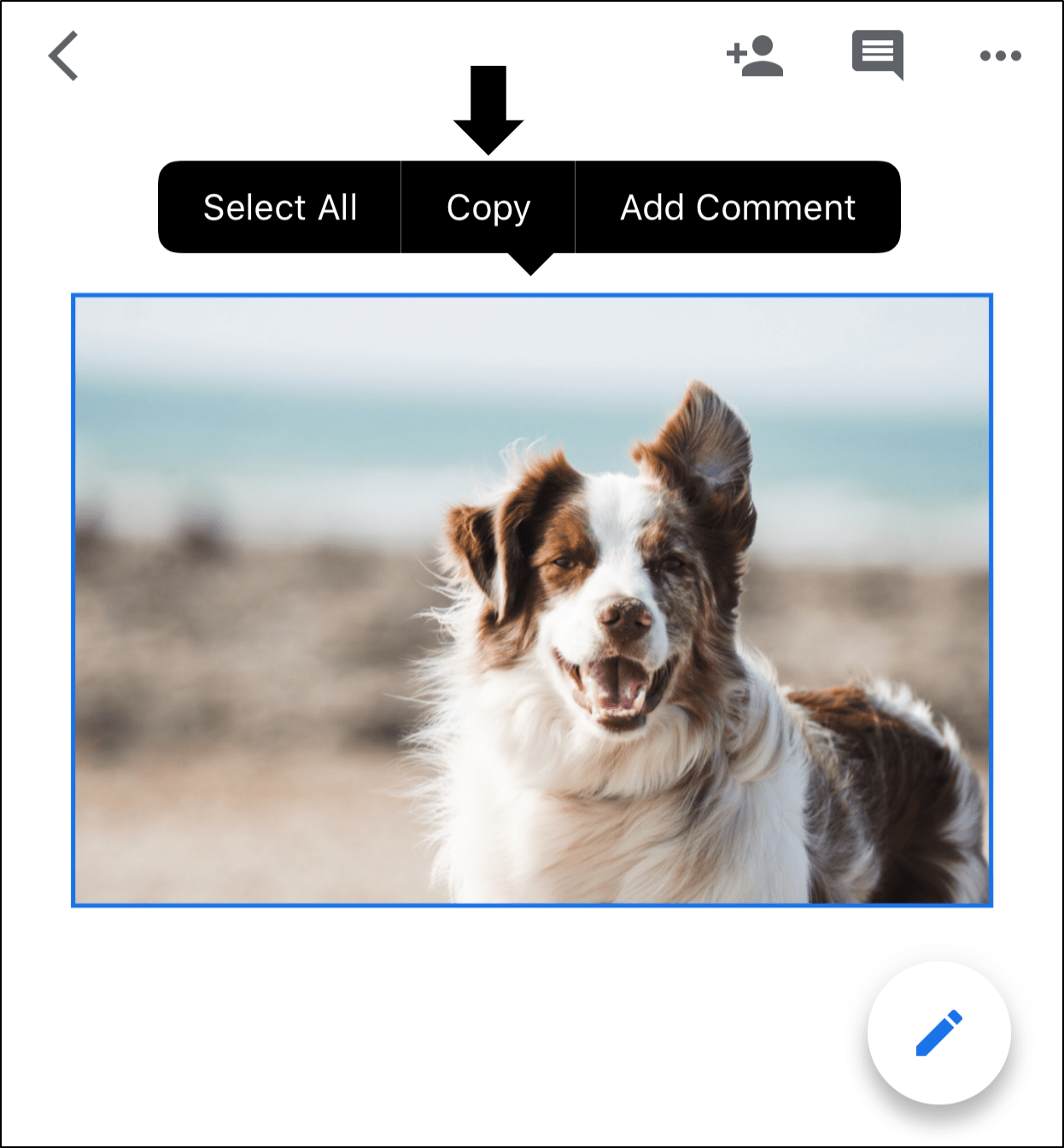copy picture to notes app to save pictures from Google Docs on iPhone and Android