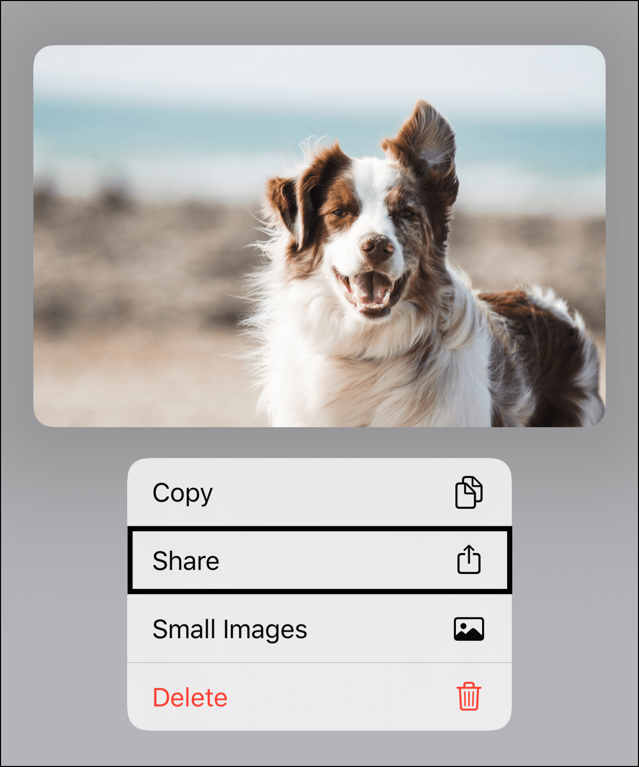 copy picture to notes app to download images from Google Docs on iPhone and Android